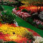 garden-destaque