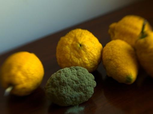 Limoes-crop.jpg